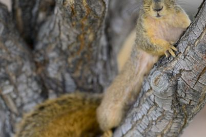 a-squirrel-has-tested-positive-for-the-bubonic-plague-in-colorado-scaled.jpg