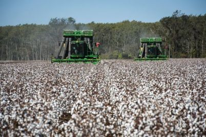 cotton-prices-rise-as-lack-of-rain-shrinks-crop.jpg